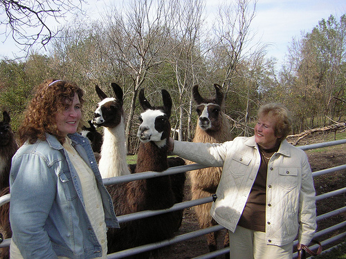 Karin and Helen petting the farm's friendlier llamas.