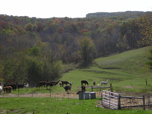 A stunning vista from the hill at the top of the farm, where the house and studio are located.